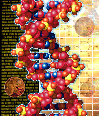 Artwork Of Foetuses And Dna Art Print