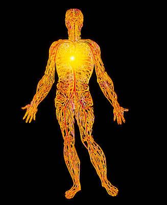 Artwork Of The Human Venous System (from Vesalius) Art Print by Mehau Kulyk