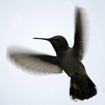 Digital Art - As She Flies by Holly Ethan