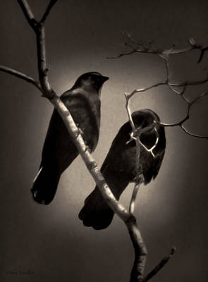 Photograph - As The Crows Fly by Debra     Vatalaro