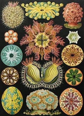 Ascidiae Organisms, Artwork Art Print by Mehau Kulyk