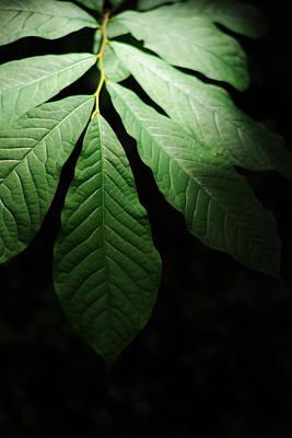 Realistic Photograph - Asimina Triloba Foliage by Rebecca Sherman