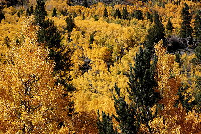 Photograph - Aspen 2 by Fred  Sheridan