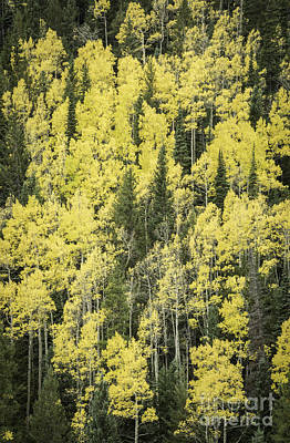Photograph - Aspen Colors by David Waldrop