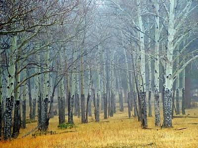 Photograph - Aspen Fog by Ken Smith