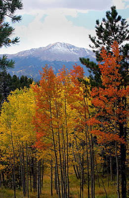 Aspen Grove And Pikes Peak Art Print by Kimberlee Fiedler