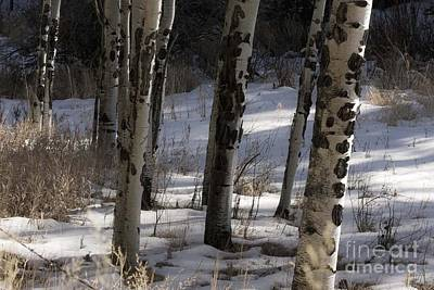 Art Print featuring the photograph Aspen Grove by Angelique Olin