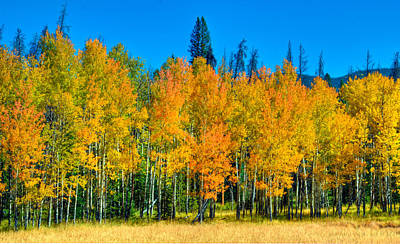 Photograph - Aspen Grove by Harry Strharsky