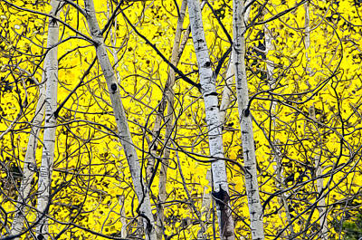 Photograph - Aspen by James Steele