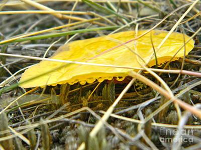Aspen Leaf After The Rain Art Print by Sara  Mayer