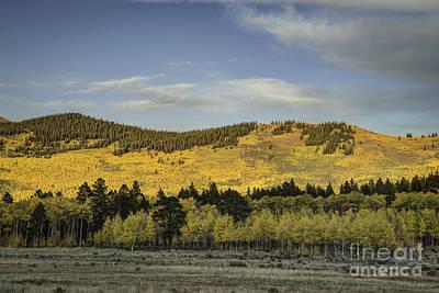 Photograph - Aspen On Hillside by David Waldrop