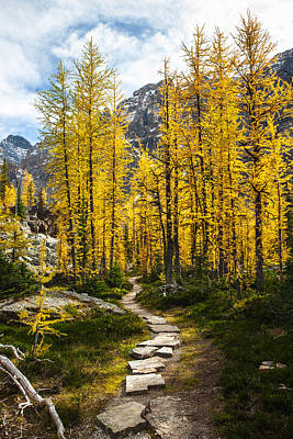Craig Brown Photograph - Aspen Pathway by Craig Brown