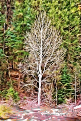 Photograph - Aspen Tree On A Forest Road by Donna Greene