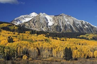 Aspen Trees In Autumn, Rocky Mountains Art Print by David Ponton