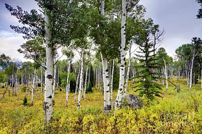 Jackson Hole Wall Art - Photograph - Aspen Trees In Jackson Hole Wyoming by Dustin K Ryan
