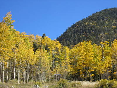 Photograph - Aspens In New Mexico by Kerry Bennett