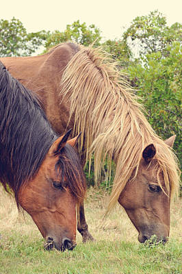 Assateague Ponies Art Print