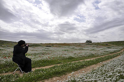 Photograph - At Lachish Anemone Fields by Dubi Roman
