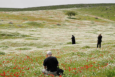 Photograph - At Lachish's Magical Fields by Dubi Roman