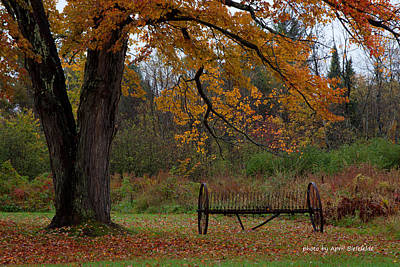 Fall Foliage Photograph - At Rest by April Bielefeldt