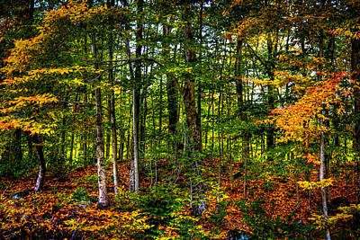 Photograph - At The Base Of Mccauley Mountain by David Patterson