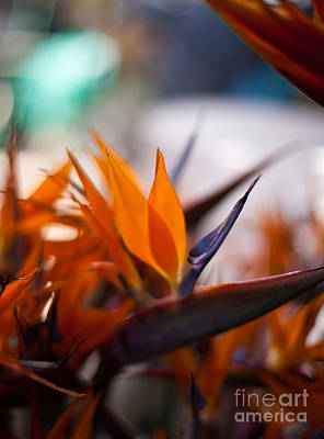 Animals Photos - At the Flower Market Bird of Paradise by Mike Reid
