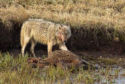 Carcass Photograph - At The Kill by Sandy Sisti