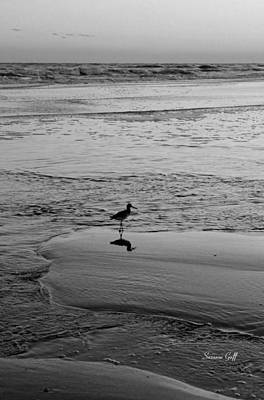 At Twilight In Black And White Art Print by Suzanne Gaff