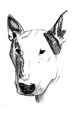 Pitbull Drawing - Athos. by JF Mondello