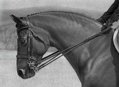 Equine Drawing - Athos by Tim Dangaran