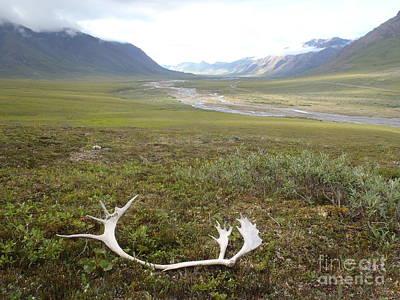 Photograph - Atigun Valley Caribou Shed by Adam Owen