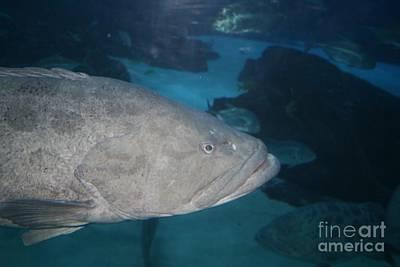 Fish Photograph - Atlanta Aquarium - 03 by Sherrie Winstead