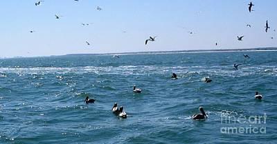 Shark Art - Atlantic Ocean Birds by April Patterson