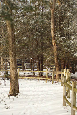 Photograph - Audubon Winter Trails by Margie Avellino