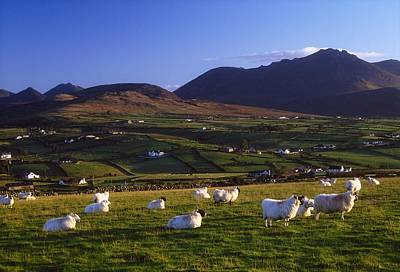 Farm Scenes Photograph - Aughrim Hill, Mourne Mountains, County by Gareth McCormack