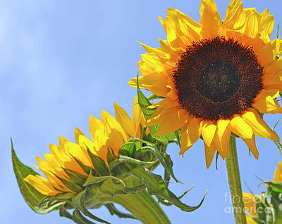 Photograph - August Sunshine by Traci Cottingham