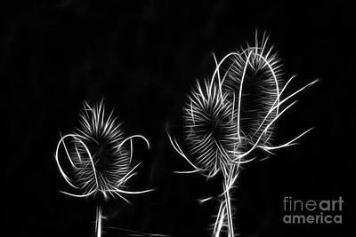 Photograph - Aura Wheat by Denise Oldridge