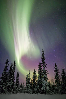 Kiruna Photograph - Aurora Borealis And Snow Covered Trees by Justin Reznick Photography