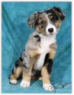 Pups Digital Art - Aussie Blue Pup by Maxine Bochnia
