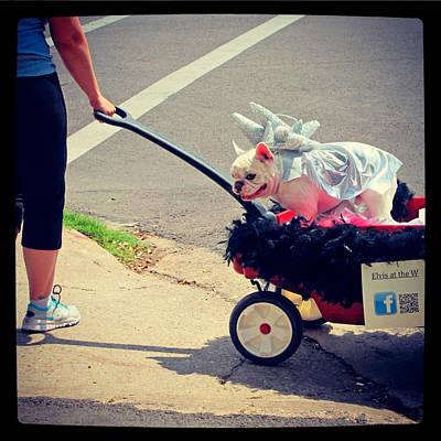 Elvis Photograph - Austin Pet Parade 1 by Pauline Jacobson