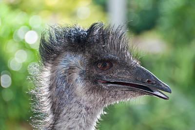 Australian Bird Art Print by Linda Pulvermacher