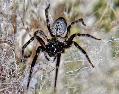 Photograph - Australian Spider Badumna Longinqua by Chriss Pagani