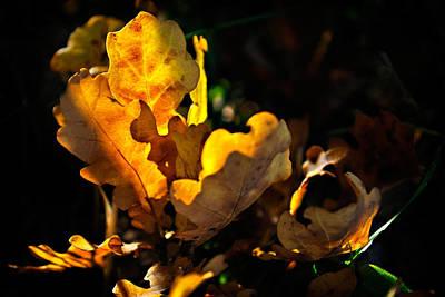 Autmn Leaf Art Print