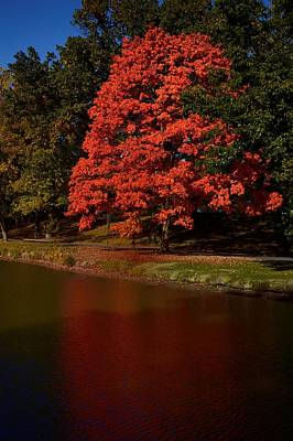 Photograph - Autum Color by Jeffrey Swank