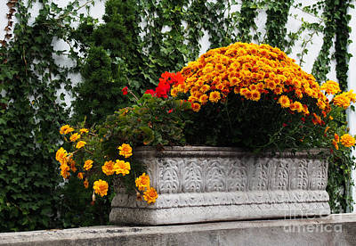 Stone Trough Photograph - Autum Flowers With Red Accents And Ivy by Anne Boyes