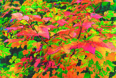 Autum Maple Leaves 3  Art Print by Lyle Crump