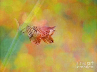 Photograph - Autumn . . . Gently by Judi Bagwell