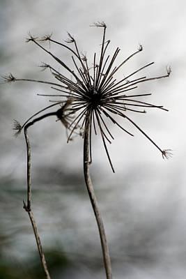 Dray Plants Photograph - Autumn Abstract by Valia Bradshaw
