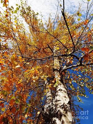 Campinas Photograph - Autumn Again by AmaS Art