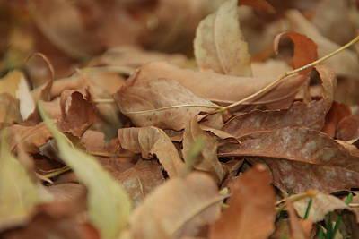 Autumn Ash Leaves Original